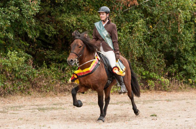 Prins frá Brunni - Islandpferd zu verkaufen