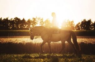 """Tennessee Walking Horse Deckhengst """"Pride's Magic Potion"""""""